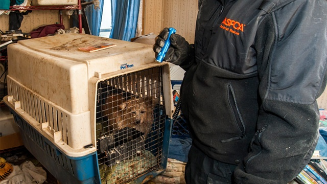 15 neglected dogs, parakeet rescued in Monroe County