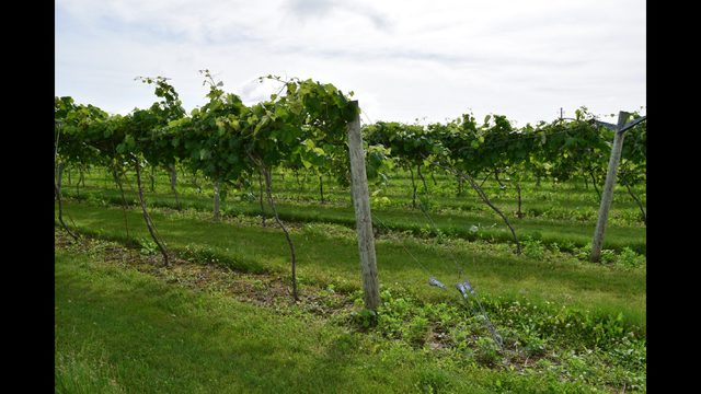 Driftless Area soon to be home to Wine & Cheese trail